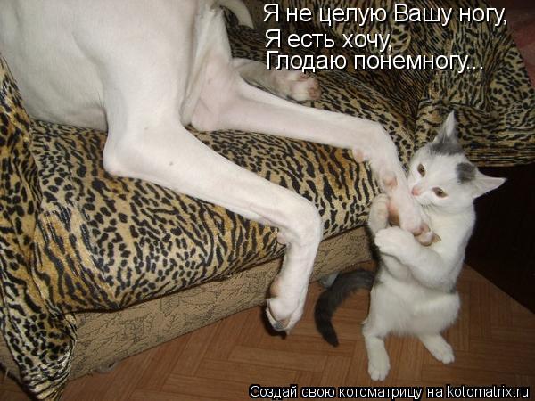 Котоматрица: Я не целую Вашу ногу, Я есть хочу, Глодаю понемногу...