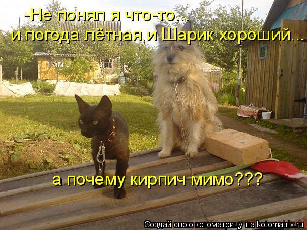 Котоматрица: -Не понял я что-то... и погода лётная,и Шарик хороший... а почему кирпич мимо???