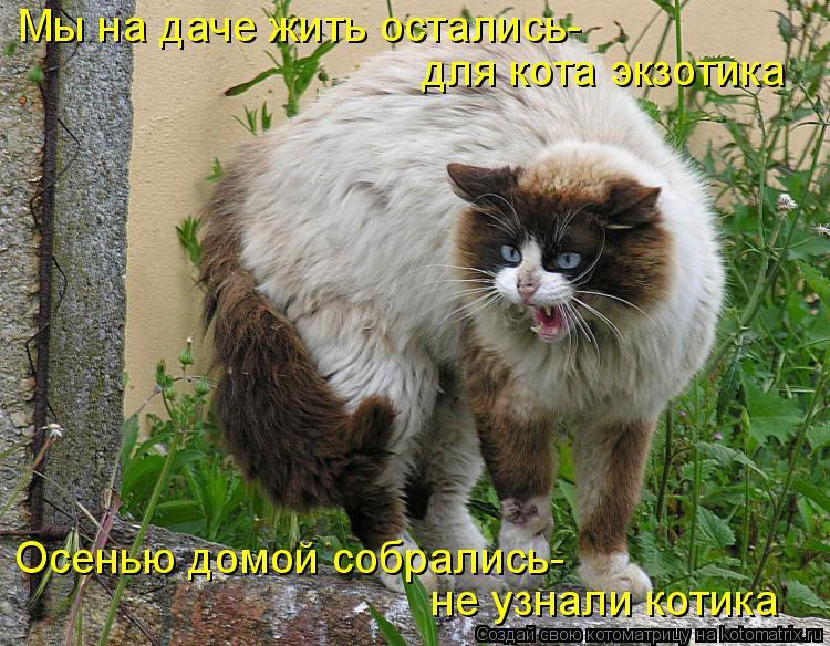 Котоматрица - Мы на даче жить остались- для кота экзотика Осенью домой собрались- не