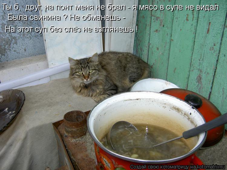 Котоматрица: Ты б,  друг, на понт меня не брал - я мясо в супе не видал Была свинина ? Не обманешь - На этот суп без слёз не взглянешь !