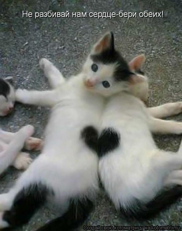 Котоматрица: Не разбивай нам сердце-бери обеих!