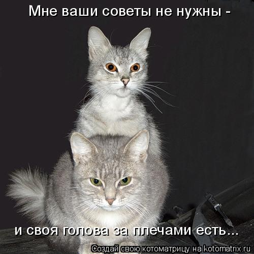 Котоматрица: Мне ваши советы не нужны - и своя голова за плечами есть...