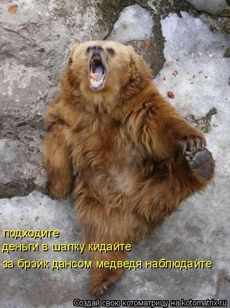 Котоматрица: подходите деньги в шапку кидайте за брэйк дансом медведя наблюдайте