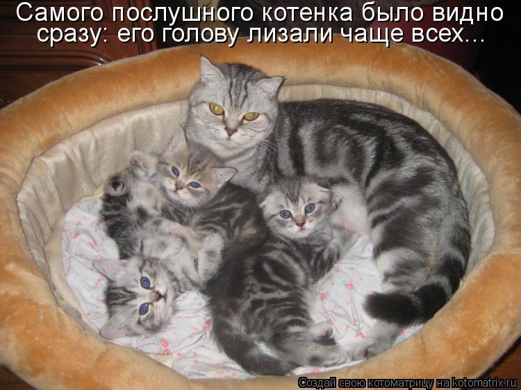 Котоматрица - Самого послушного котенка было видно сразу: его голову лизали чаще все