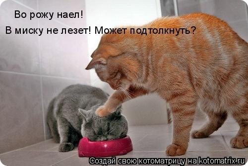 Котоматрица: Во рожу наел!  В миску не лезет! Может подтолкнуть?