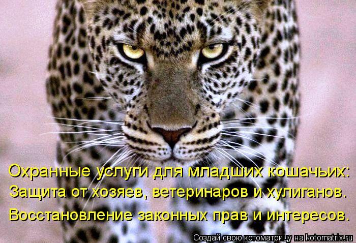 Котоматрица: Охранные услуги для младших кошачьих: Защита от хозяев, ветеринаров и хулиганов. Восстановление законных прав и интересов.