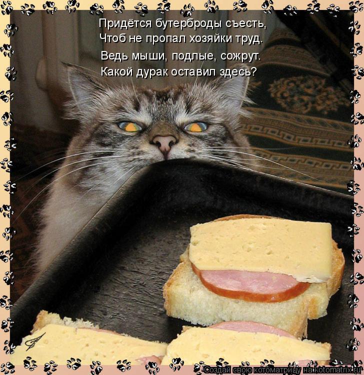 Котоматрица: Придётся бутерброды съесть, Чтоб не пропал хозяйки труд. Какой дурак оставил здесь? Ведь мыши, подлые, сожрут.