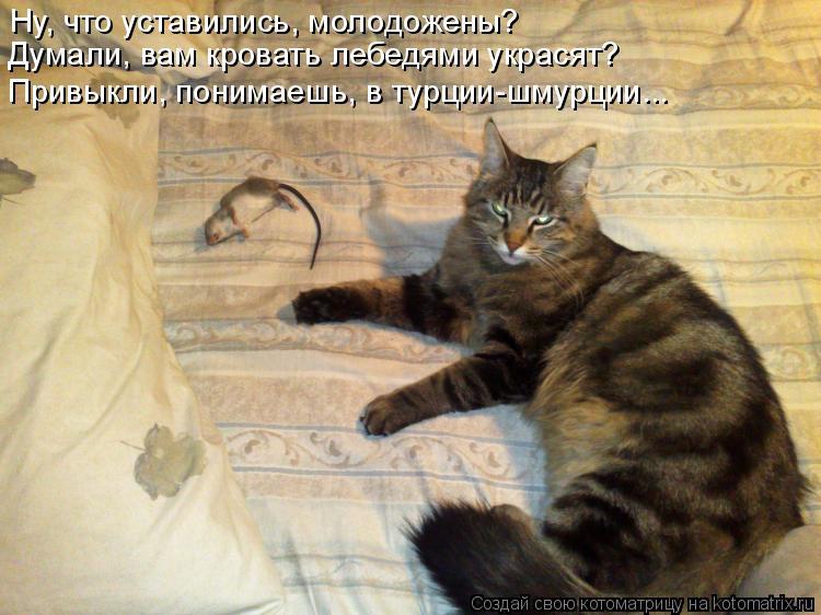 Котоматрица: Ну, что уставились, молодожены? Думали, вам кровать лебедями украсят? Привыкли, понимаешь, в турции-шмурции...