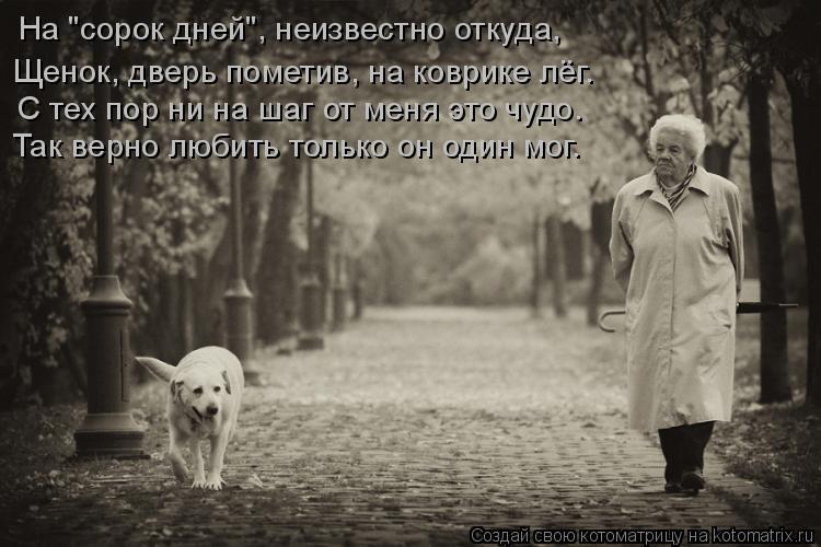 """Котоматрица: На """"сорок дней"""", неизвестно откуда,  С тех пор ни на шаг от меня это чудо. Так верно любить только он один мог. Щенок, дверь пометив, на коврике"""
