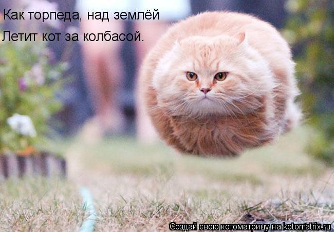 Котоматрица: Как торпеда, над землёй Летит кот за колбасой.