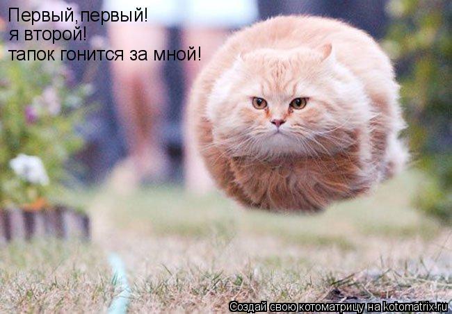 Котоматрица: Первый,первый! я второй! тапок гонится за мной!