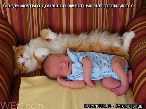 Котоматрица: А ведь мечты о домашних животных матерелизуются...