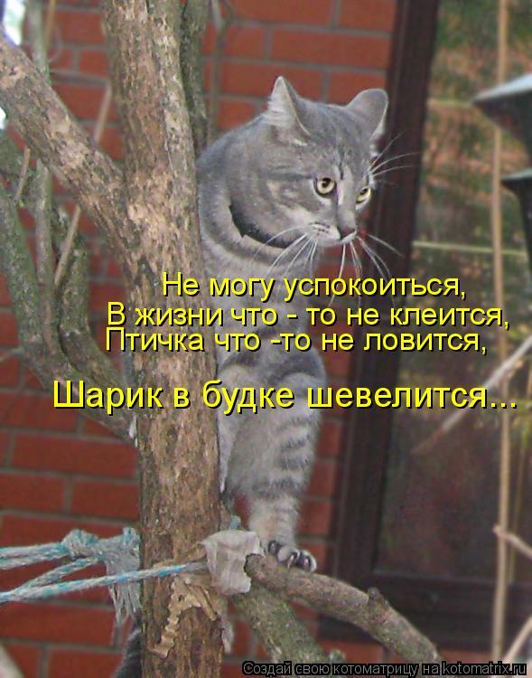 Котоматрица: Не могу успокоиться, В жизни что - то не клеится, Птичка что -то не ловится, Шарик в будке шевелится...