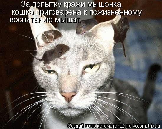 Котоматрица: За попытку кражи мышонка,  кошка приговарена к пожизненному   воспитанию мышат.