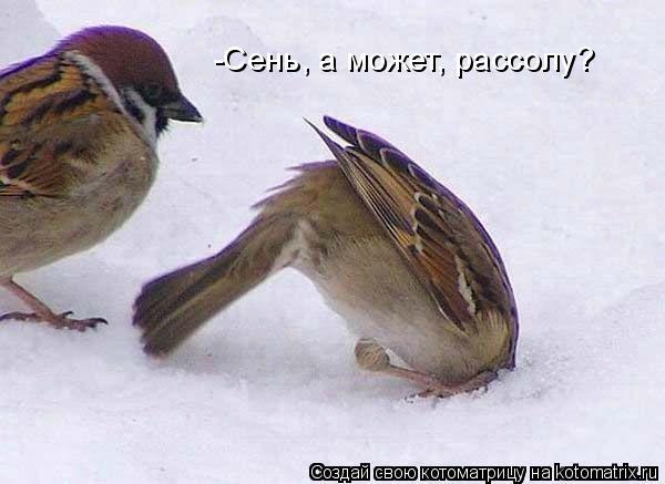 http://kotomatrix.ru/images/lolz/2011/06/10/927056.jpg