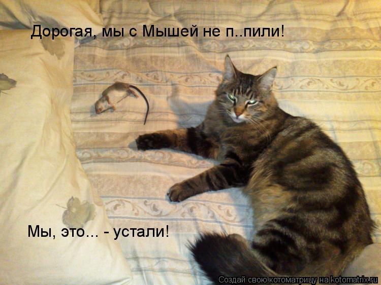 Котоматрица: Дорогая, мы с Мышей не п..пили! Мы, это... - устали!