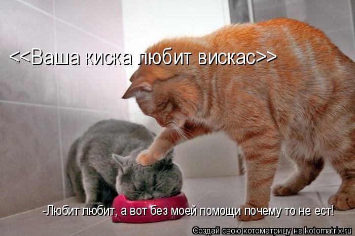 Котоматрица: <<Ваша киска любит вискас>> -Любит любит, а вот без моей помощи почему то не ест!