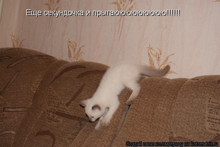 Котоматрица: Еще секундочка и прыгаююююююююю!!!!!!
