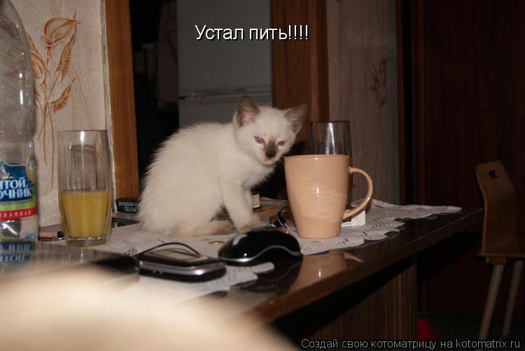 Котоматрица: Устал пить!!!!