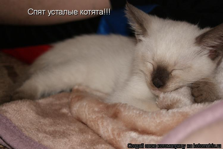 Котоматрица: Спят усталые котята!!!