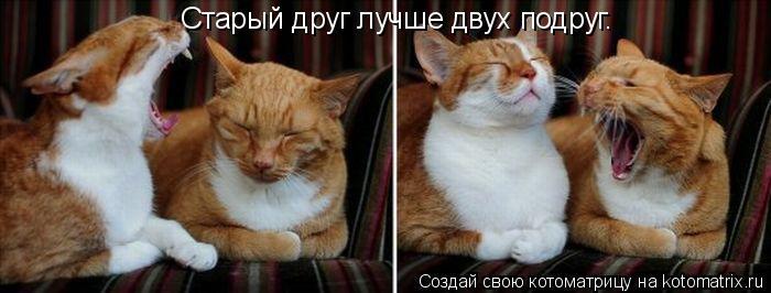 Котоматрица: Старый друг лучше двух подруг.