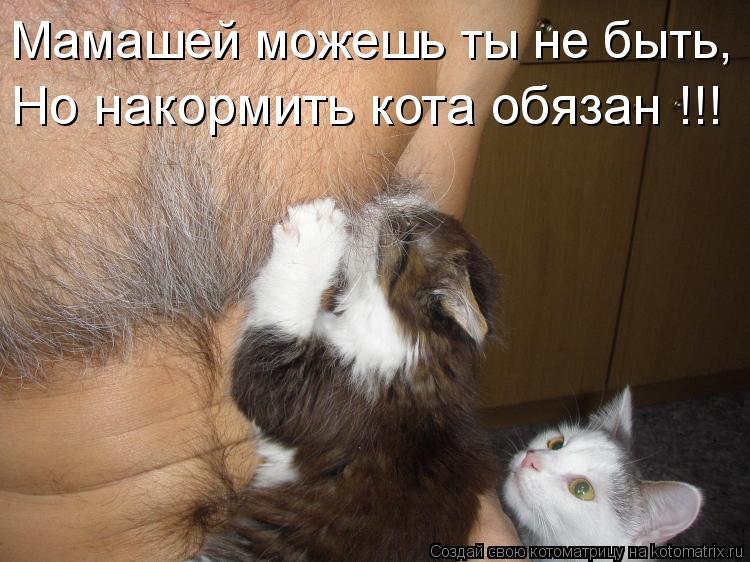Котоматрица: Мамашей можешь ты не быть, Но накормить кота обязан !!!