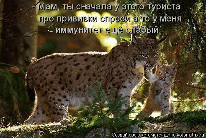 http://kotomatrix.ru/images/lolz/2011/06/11/928009.jpg