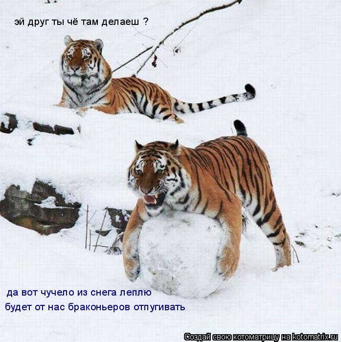 Котоматрица: эй друг ты чё там делаеш ? да вот чучело из снега леплю будет от нас браконьеров отпугивать