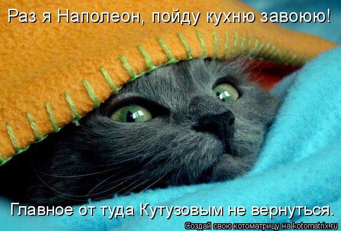 Котоматрица: Раз я Наполеон, пойду кухню завоюю! Главное от туда Кутузовым не вернуться.