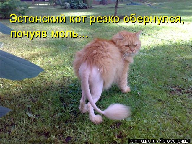 Котоматрица: Эстонский кот резко обернулся, почуяв моль...