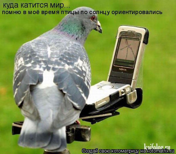 Котоматрица: куда катится мир... помню в моё время птицы по солнцу ориентировались