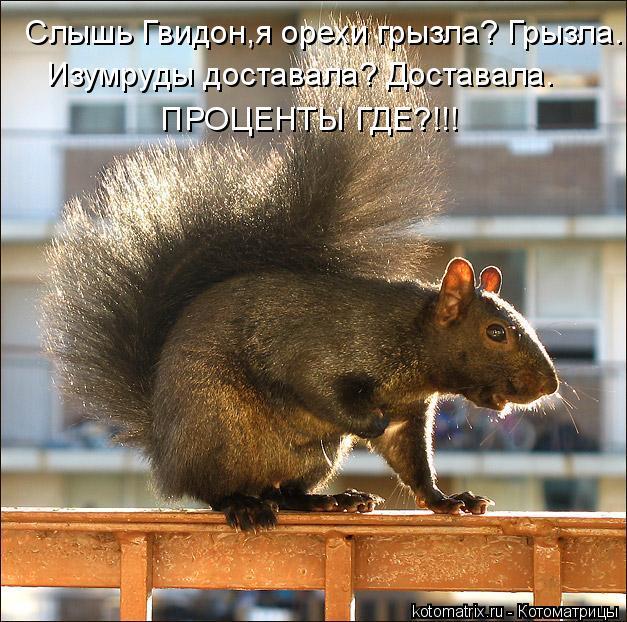 Котоматрица: Слышь Гвидон,я орехи грызла? Грызла.  Изумруды доставала? Доставала.   ПРОЦЕНТЫ ГДЕ?!!!