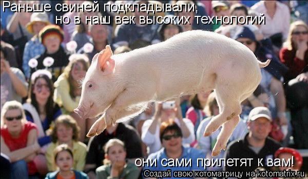 Котоматрица: Раньше свиней подкладывали, но в наш век высоких технологий они сами прилетят к вам!