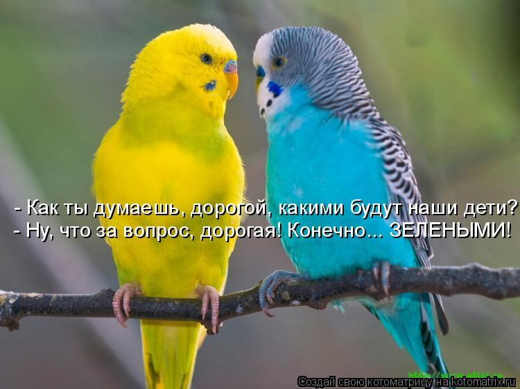 http://kotomatrix.ru/images/lolz/2011/06/12/928539.jpg
