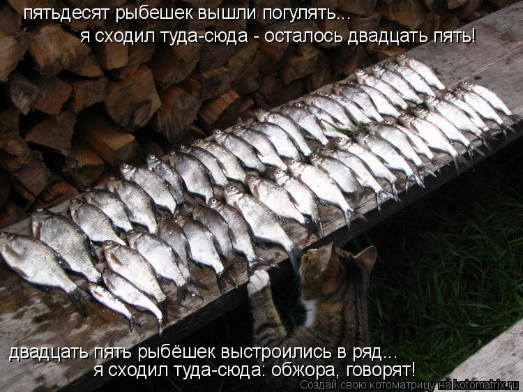 Котоматрица: я сходил туда-сюда - осталось двадцать пять! пятьдесят рыбешек вышли погулять... двадцать пять рыбёшек выстроились в ряд... я сходил туда-сюда
