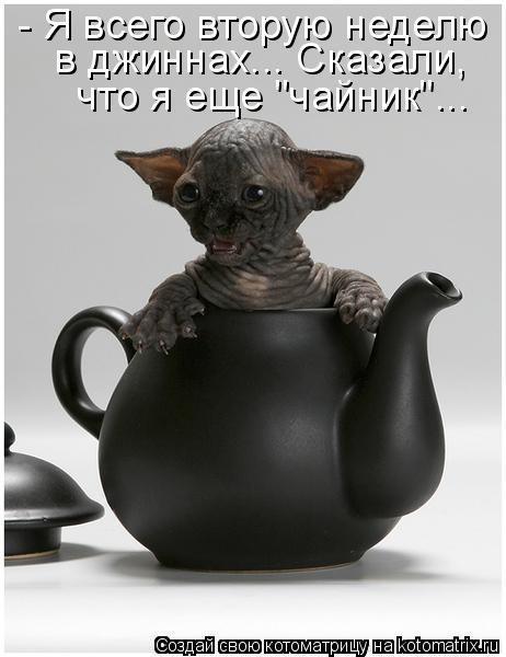 Котоматриця!)))) - Страница 5 928682