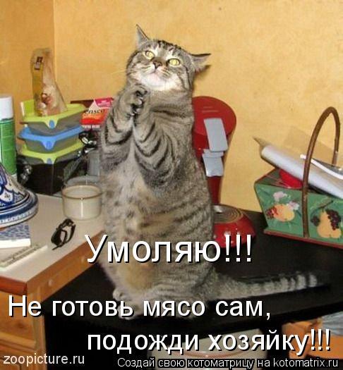 Котоматрица - Умоляю!!! Не готовь мясо сам, подожди хозяйку!!!