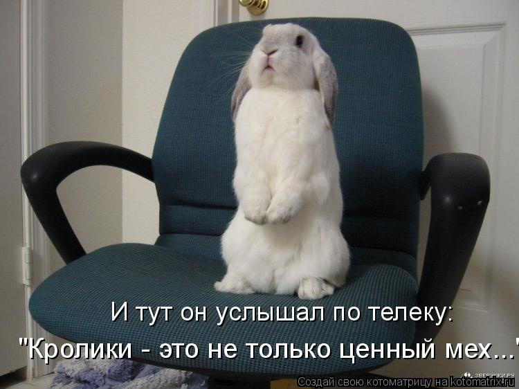 """Котоматрица - И тут он услышал по телеку:  """"Кролики - это не только ценный мех..."""""""