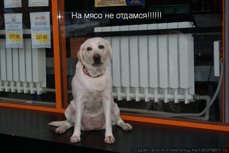 Котоматрица: На мясо не отдамся!!!!!!