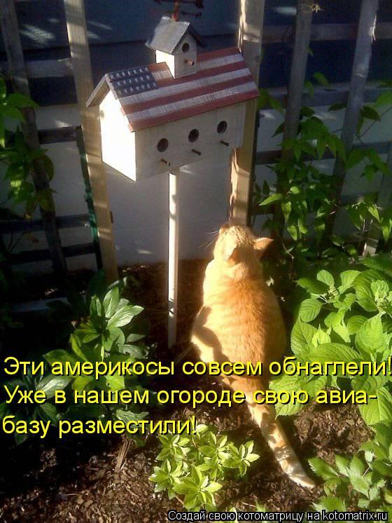 Котоматрица - Эти америкосы совсем обнаглели! Уже в нашем огороде свою авиа- базу ра