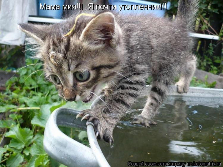 Котоматрица: Мама мия!!!  Я почти утопленник!!!