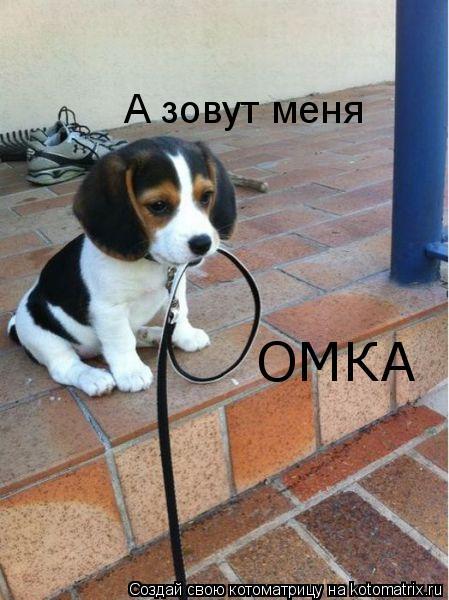 Котоматрица - А зовут меня ОМКА