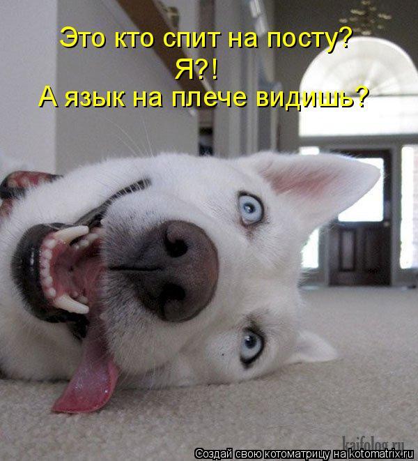 Котоматрица: Это кто спит на посту?  Я?! А язык на плече видишь?