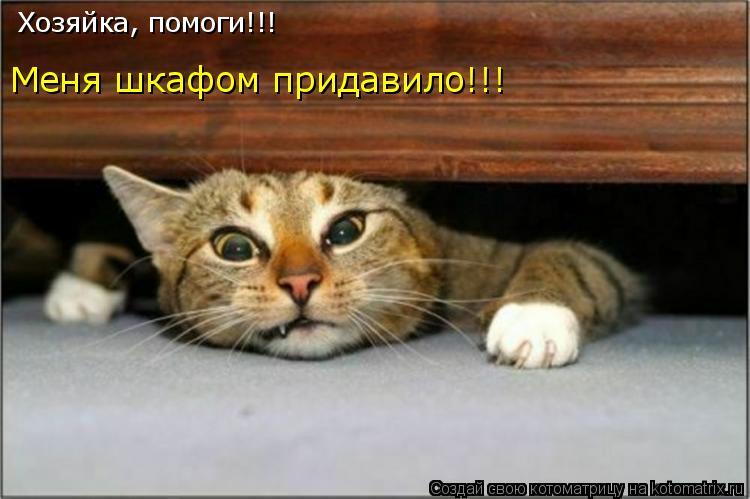 Котоматрица: Хозяйка, помоги!!! Меня шкафом придавило!!!