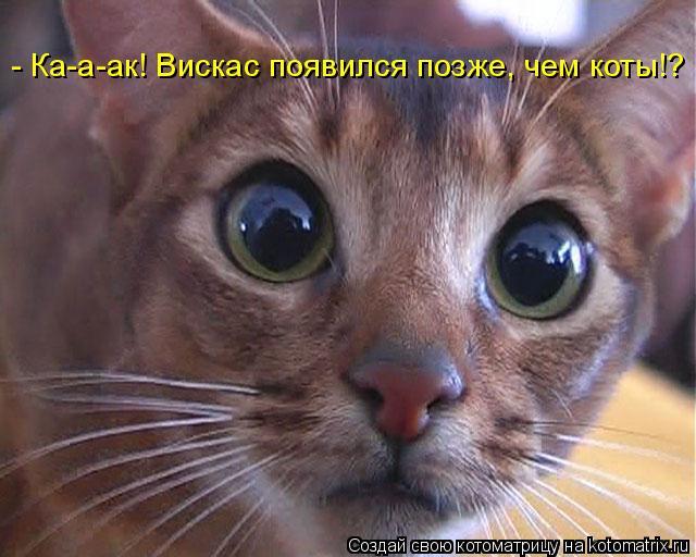 Котоматрица: - Ка-а-ак! Вискас появился позже, чем коты!?