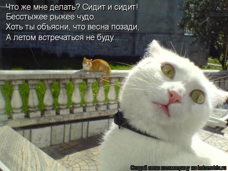 Котоматрица: Что же мне делать? Сидит и сидит! Бесстыжее рыжее чудо. Хоть ты объясни, что весна позади, А летом встречаться не буду...