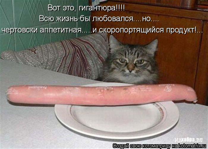 Котоматрица: Вот это, гигантюра!!!! Всю жизнь бы любовался....но.... чертовски аппетитная.....и скоропортящийся продукт!...