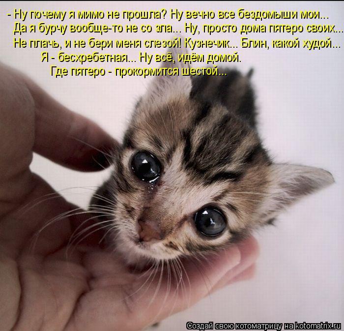 http://kotomatrix.ru/images/lolz/2011/06/14/930009.jpg