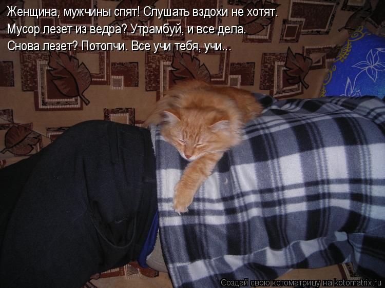 Котоматрица - Женщина, мужчины спят! Слушать вздохи не хотят. Мусор лезет из ведра?
