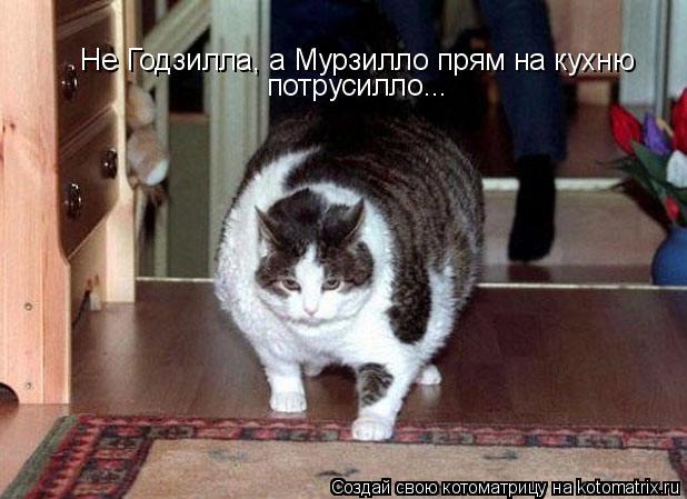 Котоматрица: Не Годзилла, а Мурзилло прям на кухню  потрусилло...